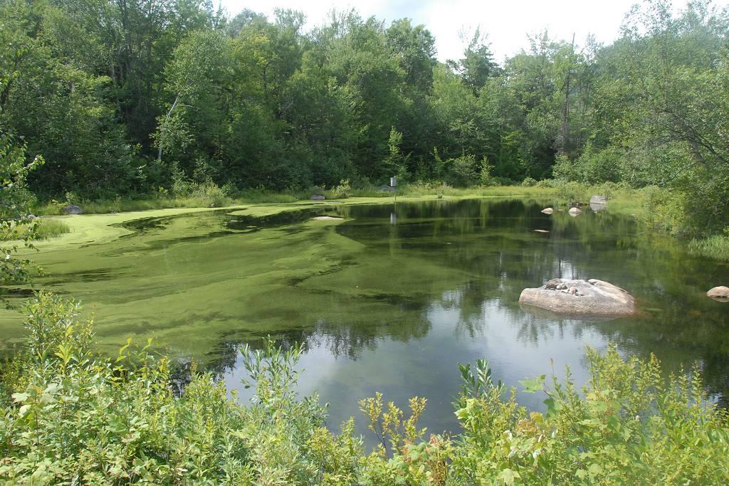 Mount cabot via the york pond bunnell notch kilkenny for Koi pond york